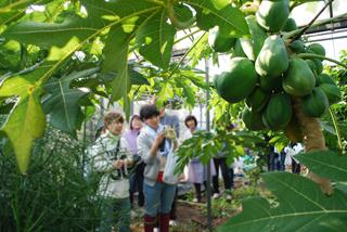 季節の恵み、南国フルーツを召し上がれ!